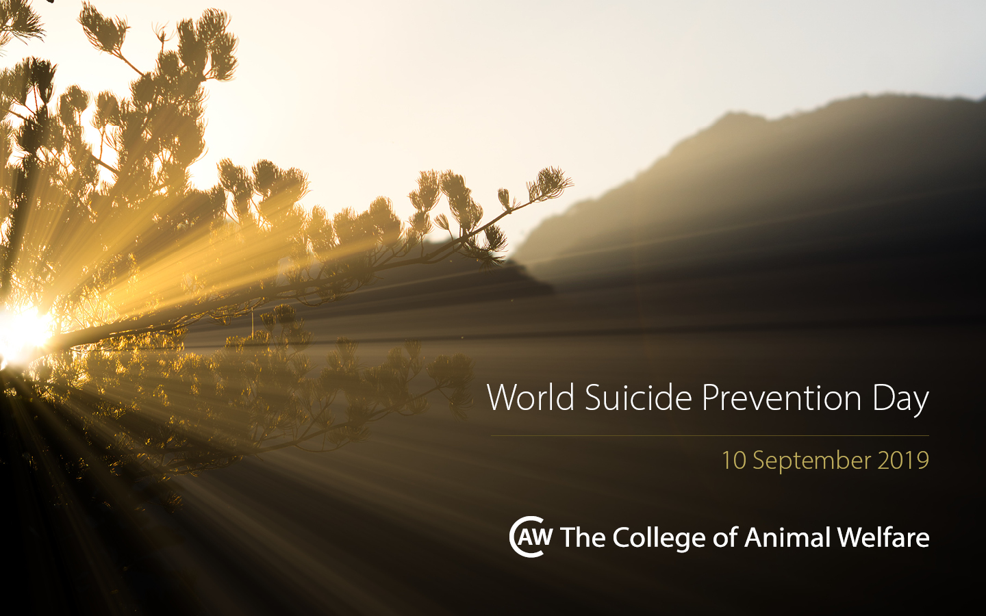 World Suicide Prevention Day: Supporting Yourself and Others